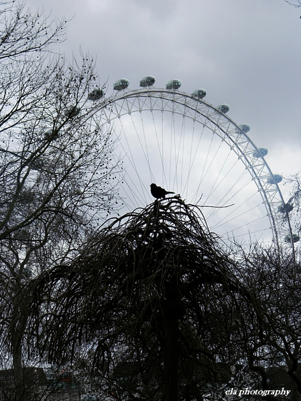 london eye bird looking 2
